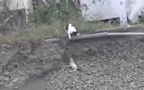 Кошка спасла щенка от неминуемой смерти (Видео).