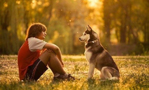 Ученые выяснили, что собаки могут читать мысли людей