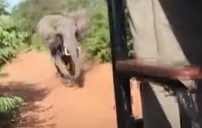 В Африке слон напал на авто с туристами
