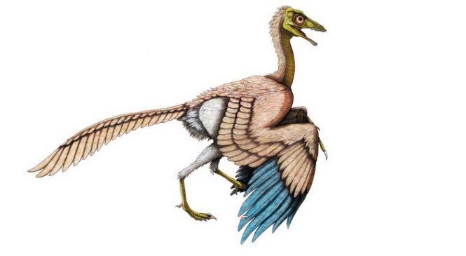 Найден новый вид из «недостающего звена» между динозаврами и птицами